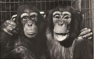 lrg-786-monkeys_-_best_friends