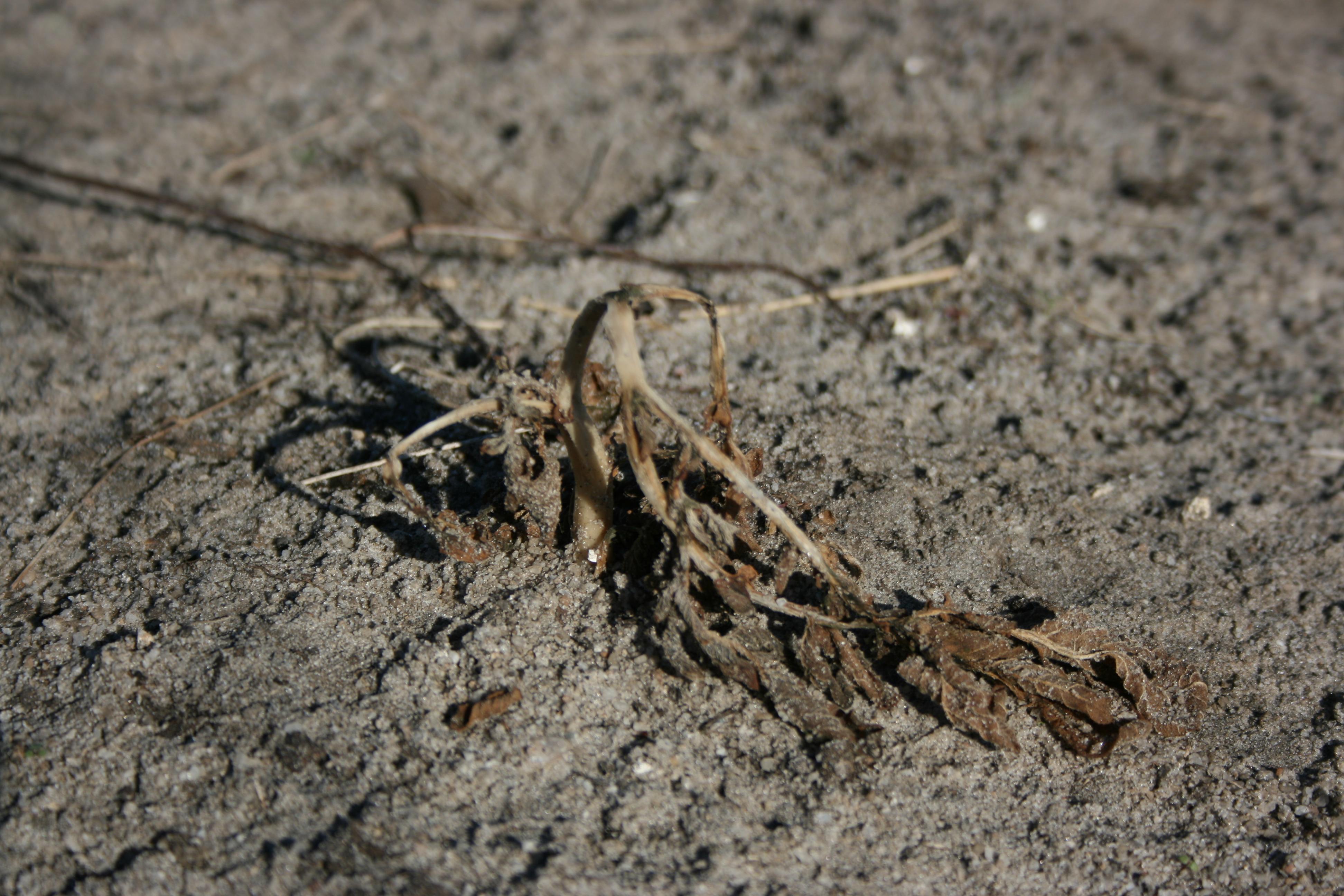 каком картинка умирающего растения этом его главное