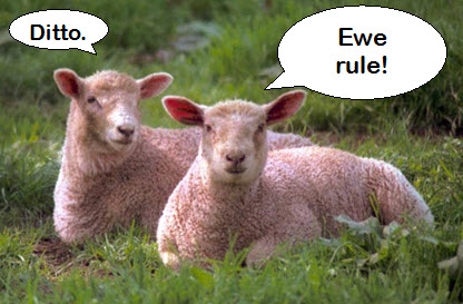 sheep ewe rule