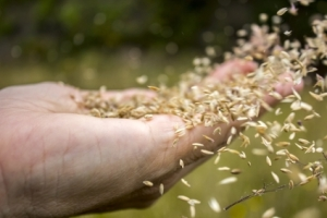 Scattering-seed-to-the-wind